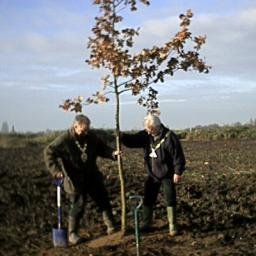 The Mayor and Dep Mayor stomp in a newly-planted tree